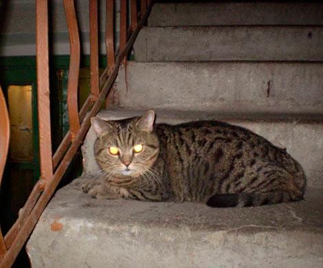 Пожилые люди вНовосибирске залили подъезд керосином из-за котов
