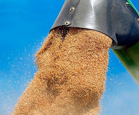 Аграриев просят замедлить вывоз зерна