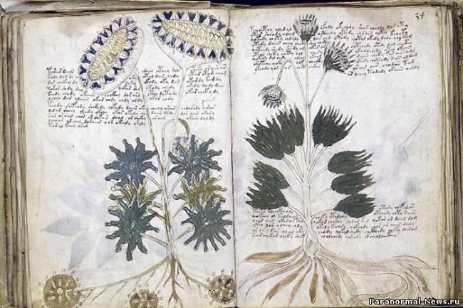 Британский ученый расшифровал рукопись Войнича?