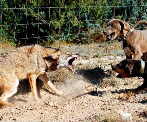 Народные избранники решили запретить притравочные станции для собак
