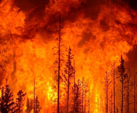 143 млн руб. выделят регионам, пострадавшим отпожаров