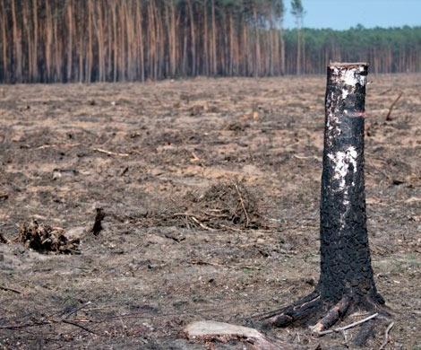 Иван Валентик: по итогам проверки пензенских лесов возбуждены уголовные дела