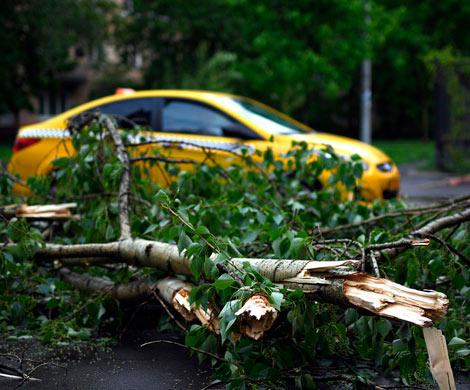 Как спасти Москву от смертельных торнадо?