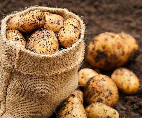 Китайские учёные собираются вырастить картофель наЛуне
