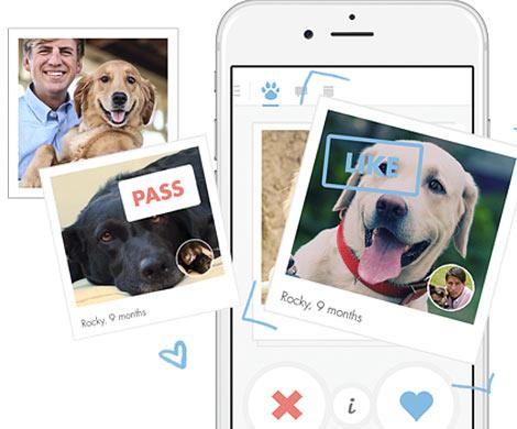 Компания Tinder запустила приложение для знакомств животных