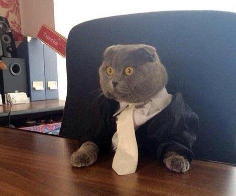 Кот стал пиар-менеджером румынского интернет-магазина