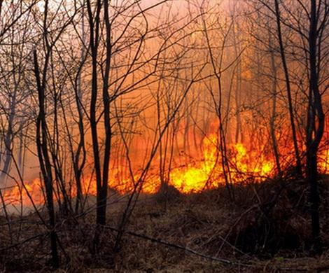 Лесные пожары - результат «красивой отчетности»