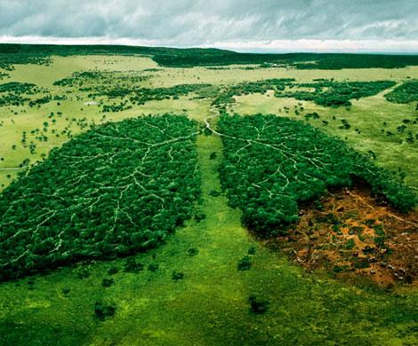 Мы - последнее поколение, способное спасти природу