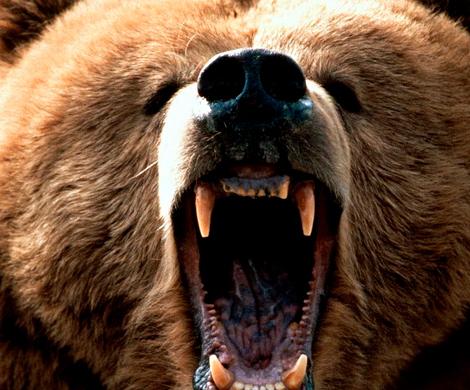 Вкамчатском городе Елизово убит крупный медведь