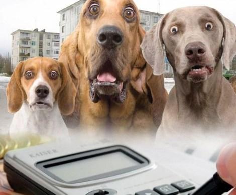 Налог на домашних животных: кошки и собаки влетят россиянам в копеечку