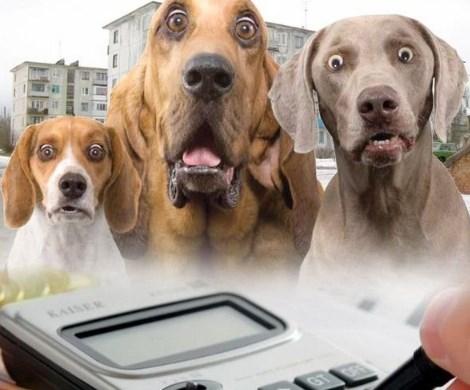 Налог на домашних животных: пора следить за руками депутатов Госдумы