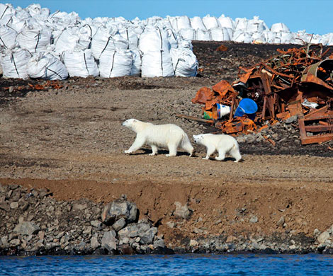Норвегия сбросит в Баренцево море миллионы тонн ядовитых отходов?