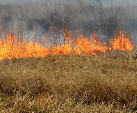 Оперативный штаб Рослесхоза поручил усилить патрулирование лесов