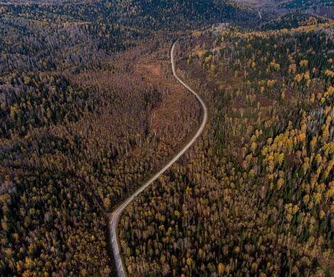 Совет Федерации увеличил штрафы за недостоверную экспертизу леса