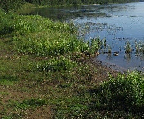 Труп неизвестного мужчины обнаружили вМоскве-реке вПодмосковье