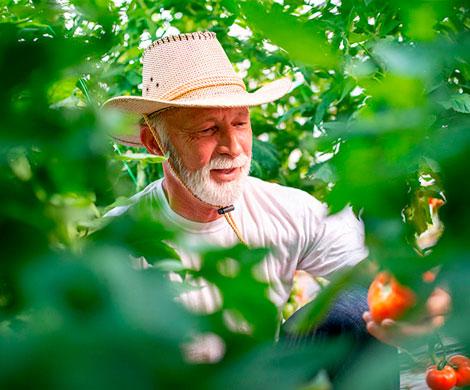 Ученые доказали пользу огородничества для хронически больных людей