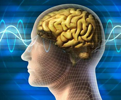 Ученые Мужской мозг стареет быстрее чем женский