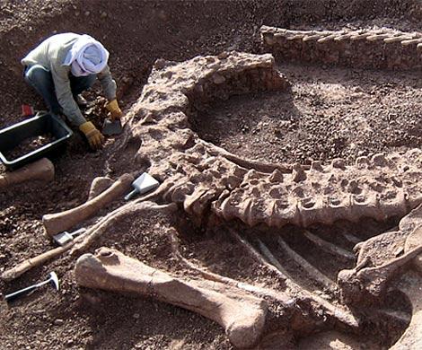 Найденный вАвстралии тайный скелет породил сенсацию