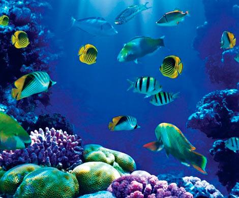Ученые: рыбы устраивают гулкие оргии, чем калечат дельфинов икитов