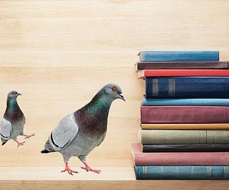 Ученые: голуби могут читать слова