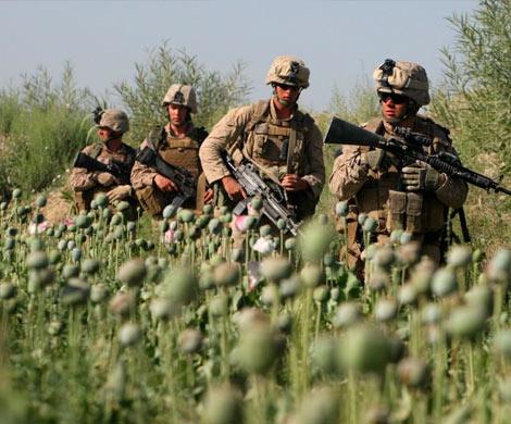 Усилия по миру в Афганистане нарастают, но наркотическая угроза остается