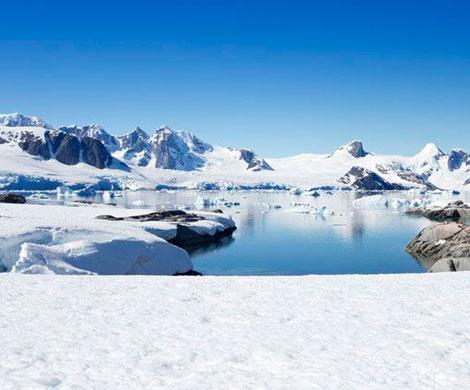 Устойчивые к антибиотикам бактерии проникли в природу Арктики