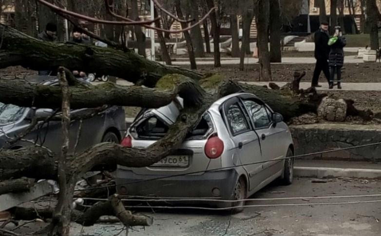 Старое дерево упало надве припаркованные машины вРостове