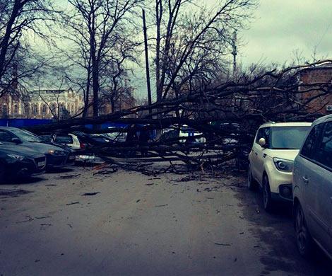 Вцентре Ростова две машины придавило сухое дерево