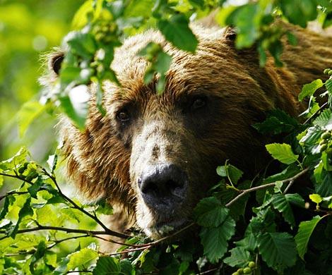 ВКраснодаре наркоман прятался вкустах от«медведя»