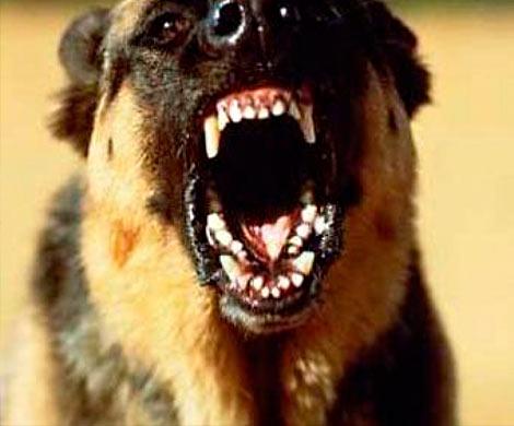 Сомского парка требуют 300 000 заукус бродячей собаки