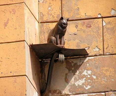 НаМалой Садовой неизвестный обокрал кота Елисея