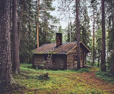 В России узаконят жилищное строительство в лесах