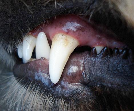 Обглоданное собаками тело петербуржца без глаз обнаружили влесу Ленобласти