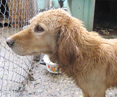 ВШадринске питомцы приюта для животных погибли вогне