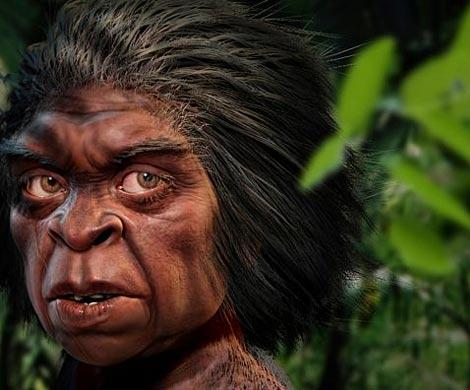 Древнейшие люди могли стать первопричиной вымирания вида «хоббитов»— Ученые