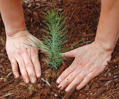 Внедрение инноваций обеспечит баланс выбытия и воспроизводства лесов