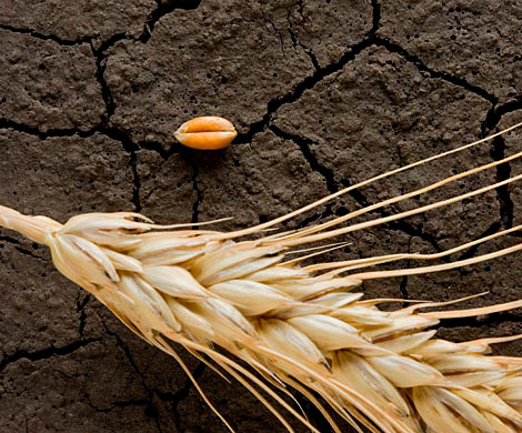 Засуха сократит урожай-2018 до минимума за пятилетку