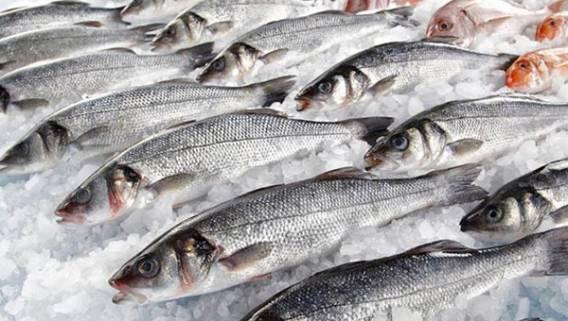 Китай заморозил поставки рыбы из России