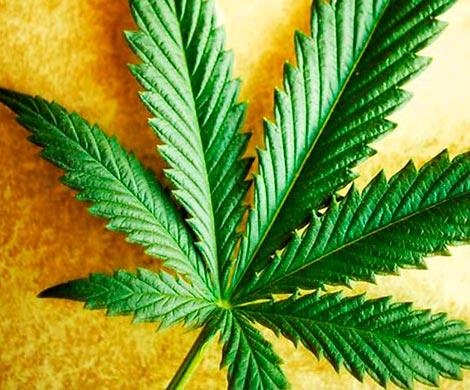 Невроз и марихуана шишка на конопле