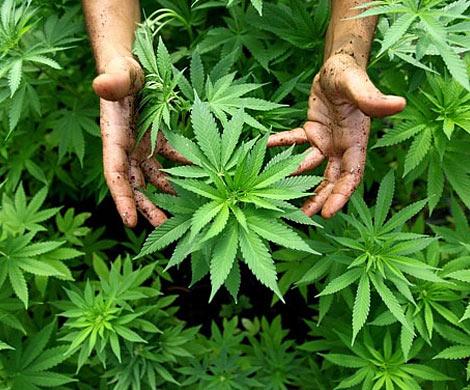 Марихуана давление марихуана вид наркотика